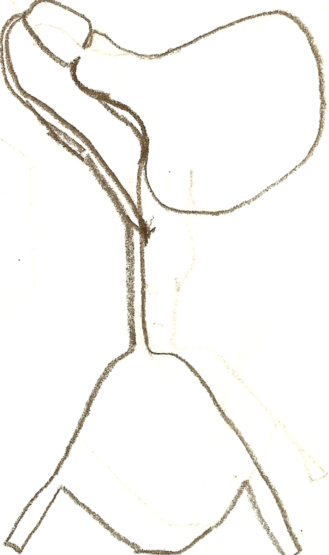 Line Drawing Javascript : Angelo hudson contour line drawing lamp